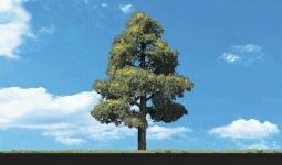Model Railroad Trees (6 in  - 9 in  tall): Train Sets Only